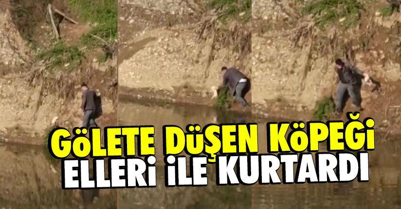 Gölete düşen yavru köpeği elleri ile kurtardı