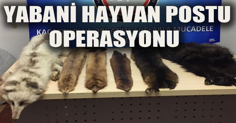 Yabani hayvan postu operasyonu