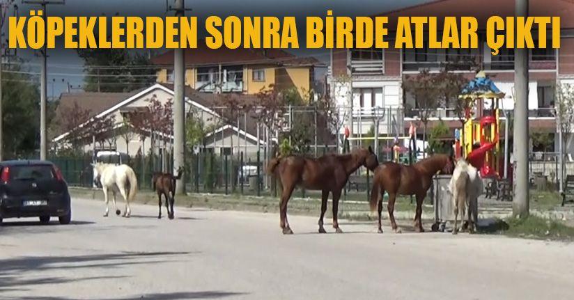 Başıboş Atlar Mahalleyi Mesken Tuttu