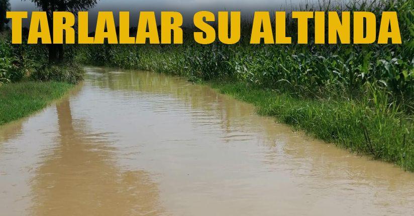 Kaynarca'da yağan şiddetli yağmurda ekim alanları sular atında kaldı