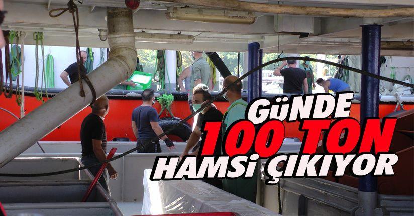Fabrika Gibi Çalışan İlçeden Günde 100 Ton Hamsi Anadolu'ya Sevk Ediliyor
