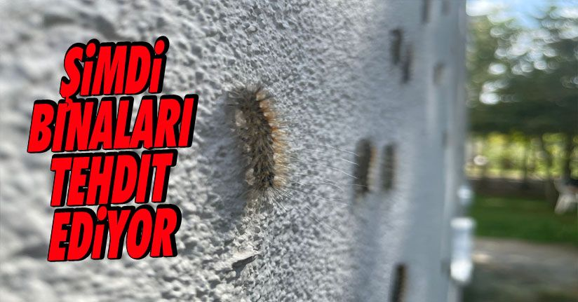 Tırtıllar binaları Sarınca Kapı Pencere Açamaz Oldular