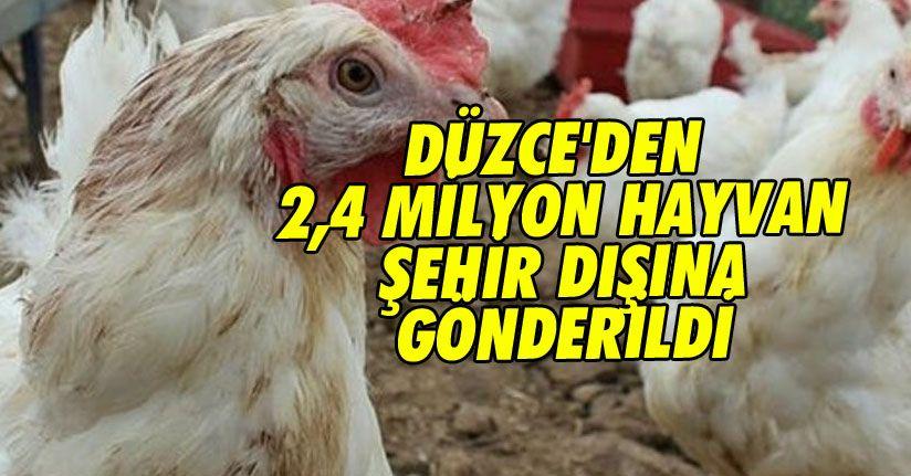 Düzce'den 2,4 Milyon Hayvan Şehir Dışına Gönderildi