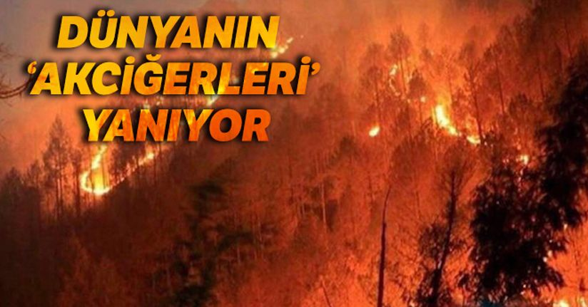 Amazonlar'dan sonra Afrika'daki ormanlar da yangına teslim