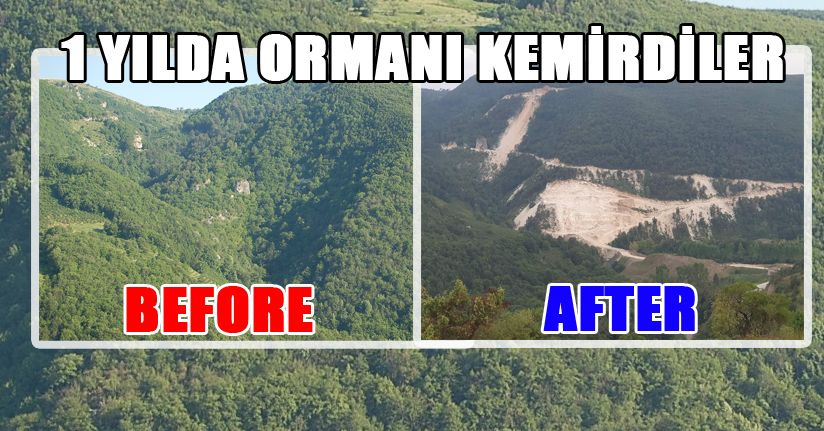 Çimento Fabrikası Ormanlarımızı Yok Ediyor