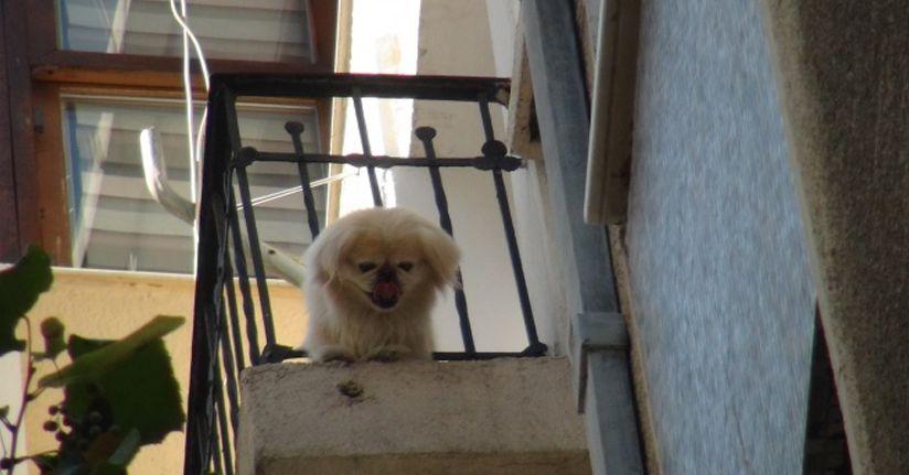 Demir korkuluklara sıkışan sevimli köpeği itfaiye kurtardı
