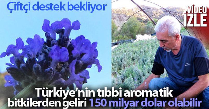 Türkiye'nin tıbbi aromatik bitkilerden geliri 150 milyar dolar olabilir