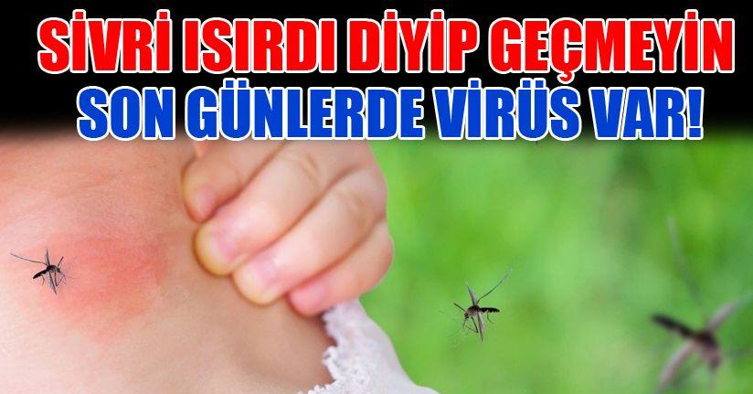 Eyvah! Sivrisinekler şehri kasıp kavuruyor