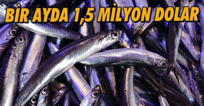 Hamsi ihracatından 1 ayda 1,5 milyon doların üzerinde döviz girdisi sağlandı