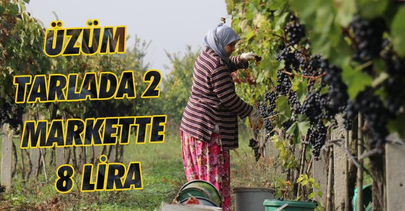 Üzüm Tarlada 2, markette 8 lira