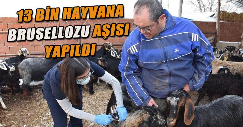 13 bin hayvan aşılandı