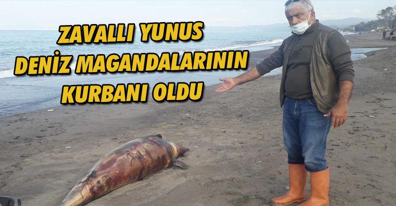 Kurşunlanarak öldürülen yunus balığı kıyıya vurdu