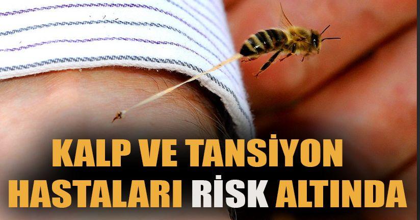 Karadeniz'e arı alerjisi uyarısı