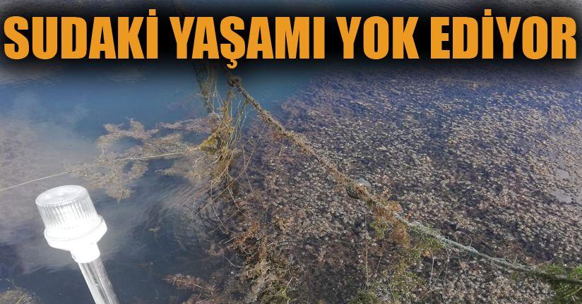 Taşlıyayla Göleti'nde 500 metre hayalet ağ bulundu